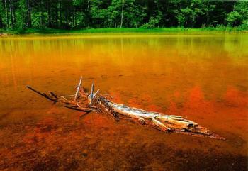 onneto-orange.jpg